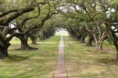 LiveOakArchway