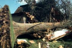 stormDamage_tree